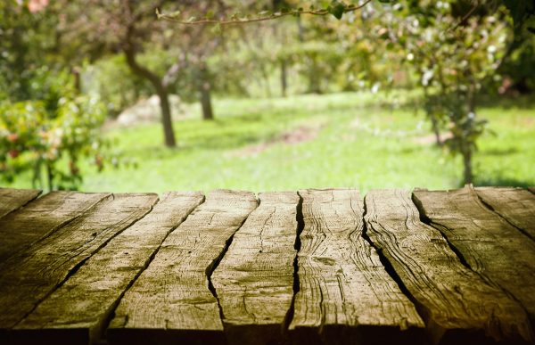 Spring green background. Garden and orchard art Design. Summer environmetal landscape concept.